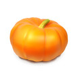 realistic pumpkin isolated on white background vector image