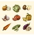Vegetables sketch set color vector image