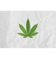 Realistic Marijuana leaf icon Isolated on vector image