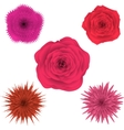 Set of beautiful colorful flowers floral vector image