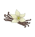 Vanilla colored botanical vector image