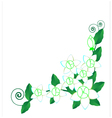 Background Jasmine flower vector image