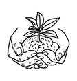 growing plant with soil in hands vector image
