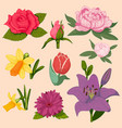beautiful watercolor flower set isolated vector image