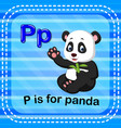 flashcard letter p is for panda vector image