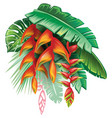 tropical plants and heliconia vector image vector image
