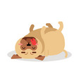 funny pug dog character lying on its back vector image