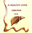healthy liver and gallbladder vector image