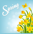 spring card with narcissus vector image vector image