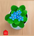 top view of flower in pot vector image