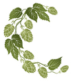 curved branch of hops vector image vector image