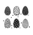 Cedar cone set sketch for your design vector image