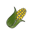 corn food grain vector image