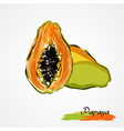papaya vector image