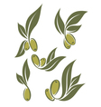 fresh olives vector image