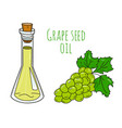 colorful hand drawn grape seed oil bottle vector image