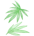 Set of watercolor green tropical leaves vector image vector image