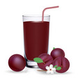 set of plum juice and fresh ripe fruits isolated vector image