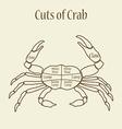 Cuts of crab vector image
