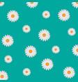white daisy background vector image