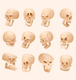 human skull face isolated on vector image