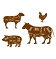 Chicken pork beef and lamb meat cuts scheme vector image vector image