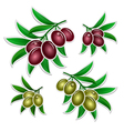 Olives branch vector image
