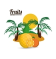 Orange pineapple palm tree and summer concept vector image vector image