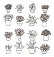 flowers and plants succulent vector image vector image