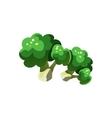 Broccoli Bright Color Simple vector image