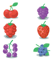 Collection of berrys vector image vector image