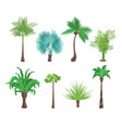 decorative green tropical palm trees set vector image