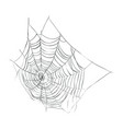 web spider vector image
