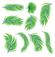 Green Palm Leaves vector image