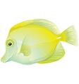 Yellow tang vector image