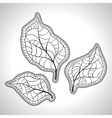 Black macro leaf natural isolated vector image