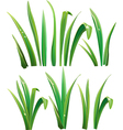 green grass on white vector image