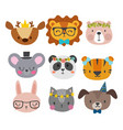 cute animals with funny accessories cat lion vector image