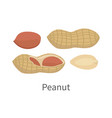 peanut in flat style design vector image