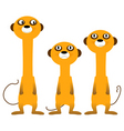 curious meerkats vector image