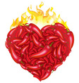 chili pepper heart vector image vector image