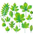 set of green leaf vector image vector image