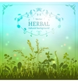 Delicate herbal background vector image