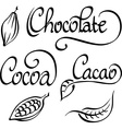 chocolate cocoa cacao text vector image