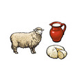 Sketch sheep milk and cheese set isolated vector image