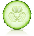 ripe cucumber vector image vector image
