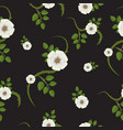 Rosehip flowers white flowers and green leaves vector image