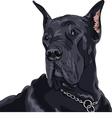 black dog Great Dane breed vector image