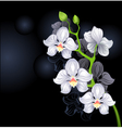 white orchids vector image vector image