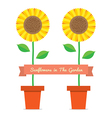 Sunflowers Pot Plant vector image